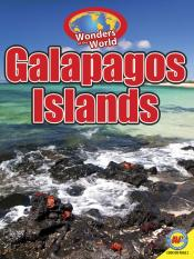 Galapagos Penguins (ebook)